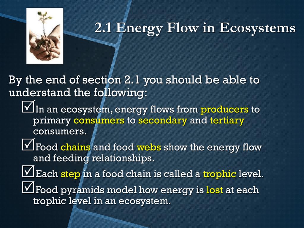 2 1 Energy Flow In Ecosystems