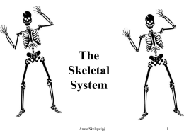 SKELETON REVIEW Skeletal System: At birth, the human body