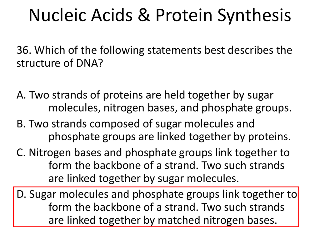 Nucleic Acids Amp Protein Synthesis