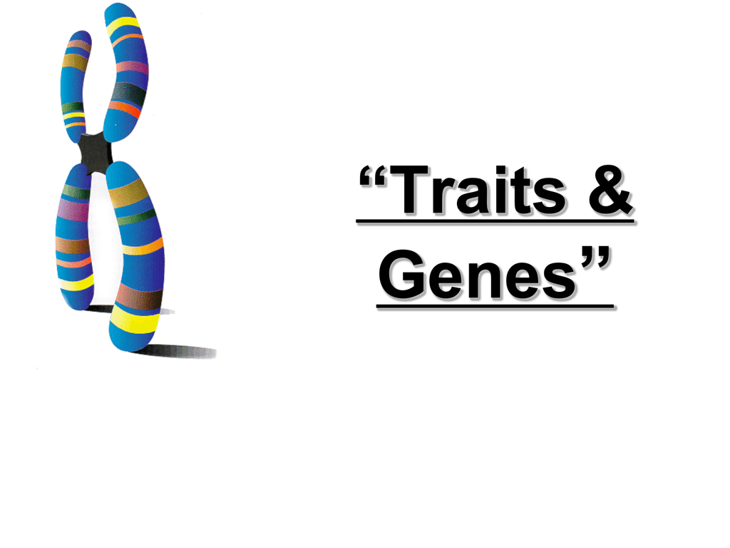 6 4 Traits Genes And Alleles