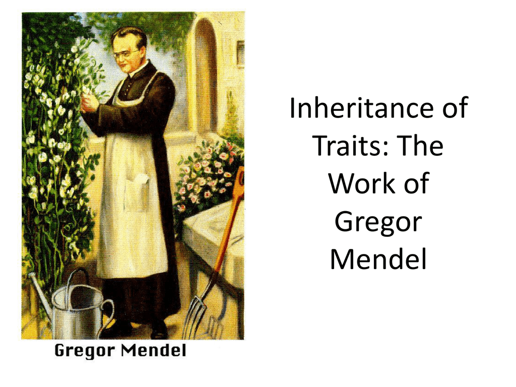 Inheritance Of Traits The Work Of Gregor Mendel