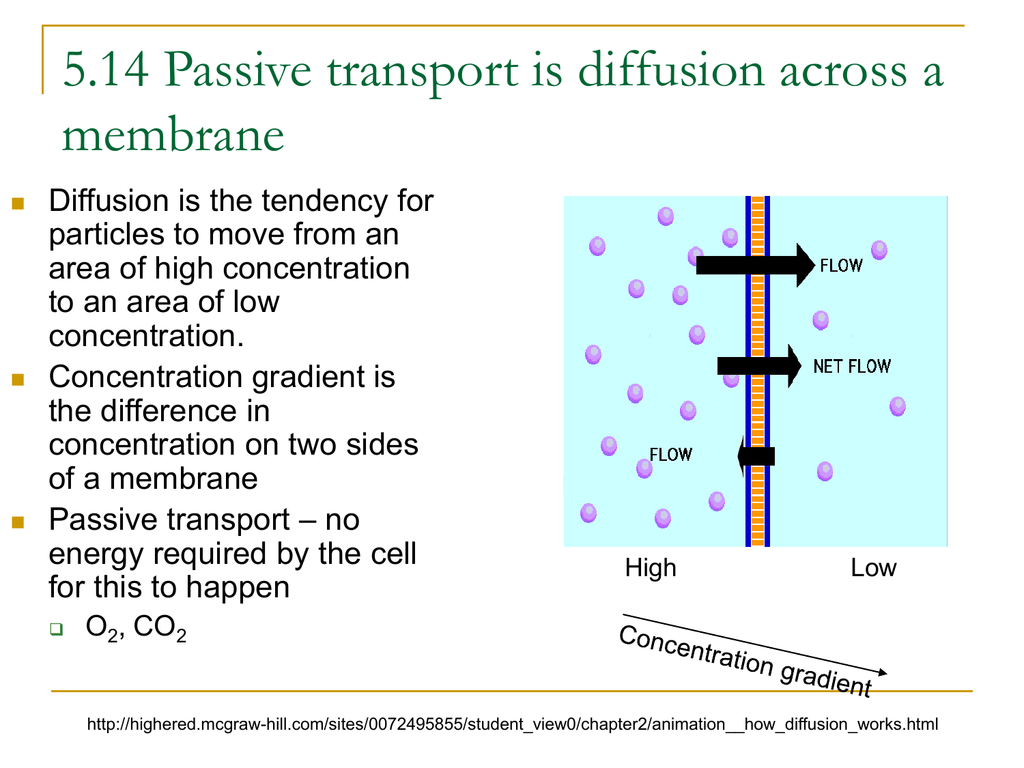 5 14 Passive Transport Is Diffusion Across A Membrane