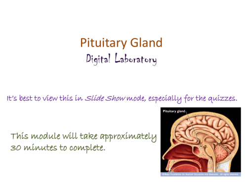 small resolution of pituitary gland diagram