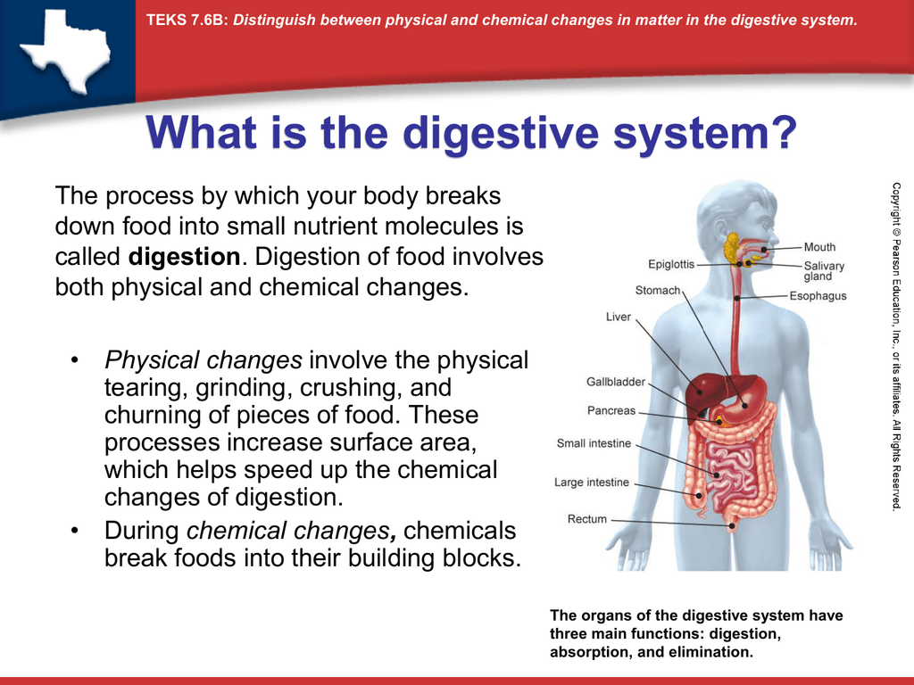 Physical And Chemical Digestion Ppt