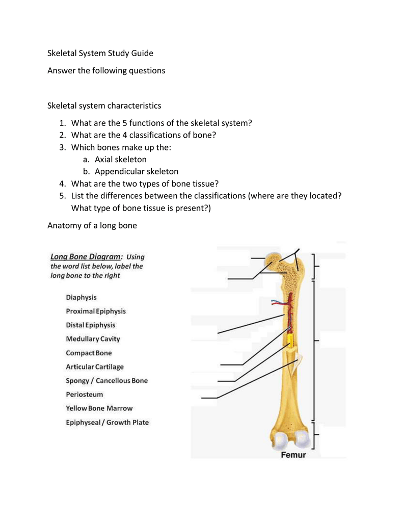 medium resolution of  following questions skeletal system characteristics 1 what are the 5 functions of the skeletal system 2 what are the 4 classifications of bone 3