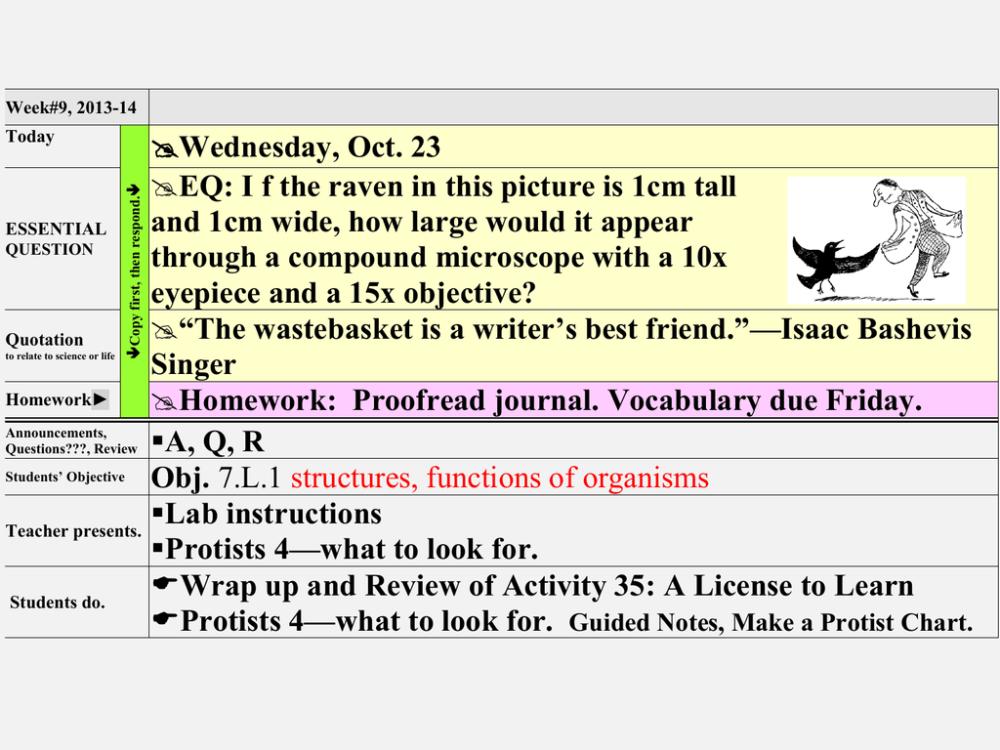 medium resolution of volvox protist diagram