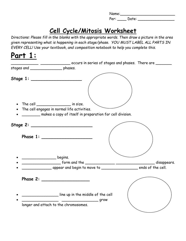 worksheet stages of mitosis worksheet grass fedjp