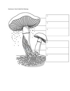 Protists and Fungi Worksheet