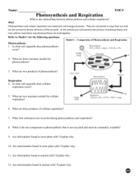 Pictures Photosynthesis Respiration Worksheet