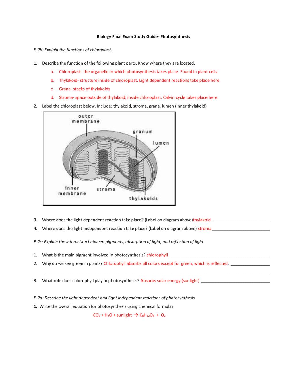 medium resolution of diagram of thylakoid