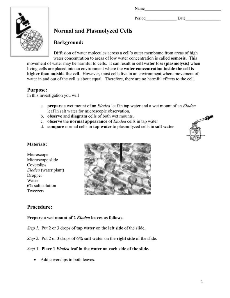 elodea leaf cell diagram leeson 10 hp motor wiring plasmolyzedcells