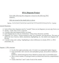 label dna diagram [ 1024 x 791 Pixel ]