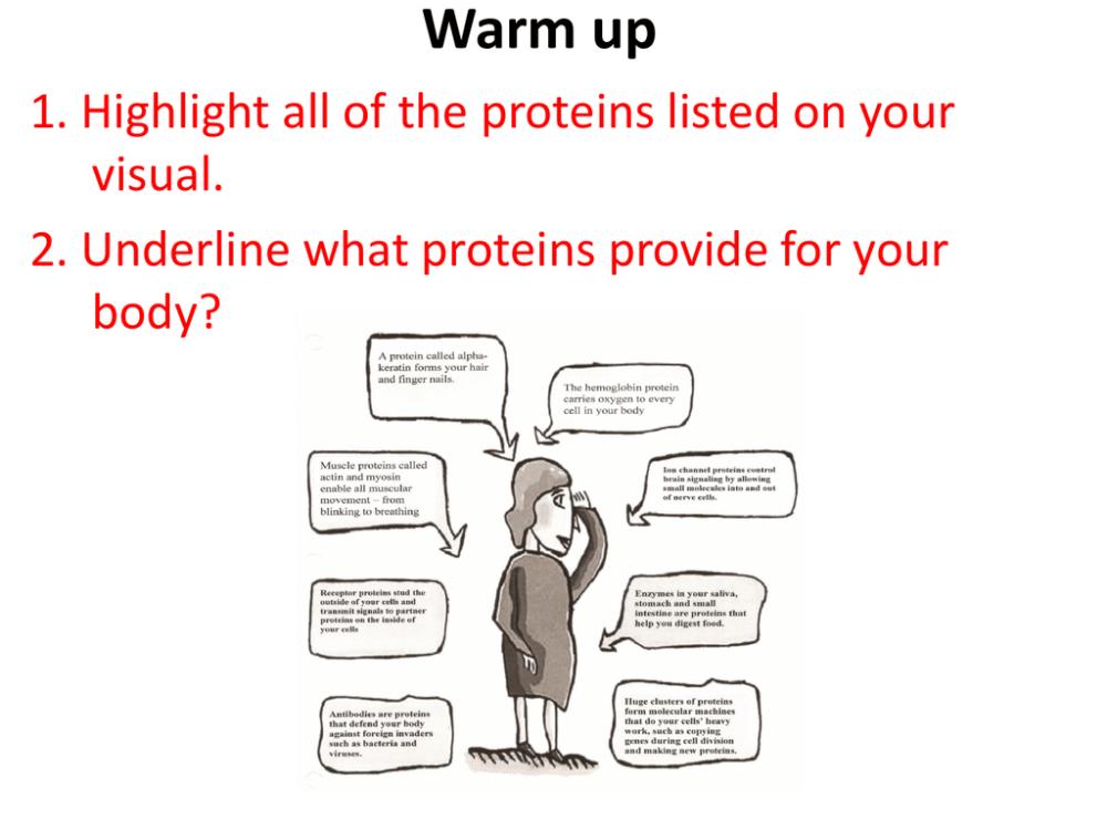 medium resolution of making protein diagram