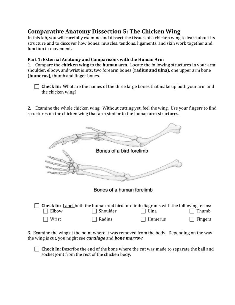 hight resolution of diagram of chcken wing