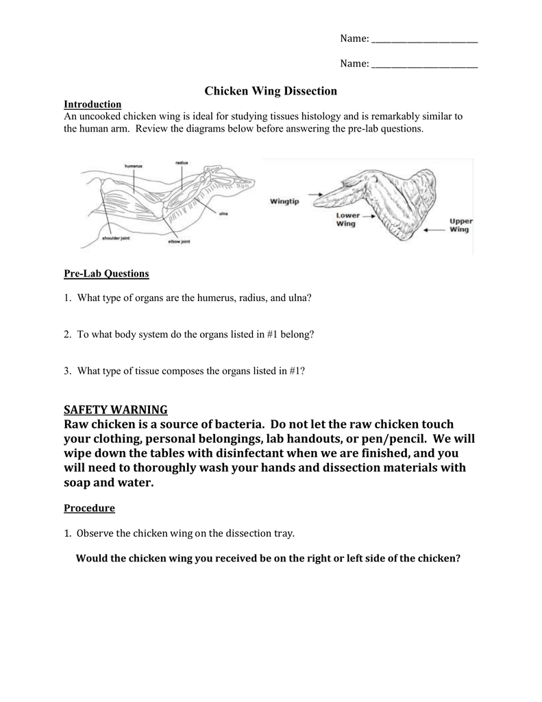 hight resolution of chicken wing dissection introduction an uncooked chicken wing is ideal for studying tissues histology and is remarkably similar to the human arm