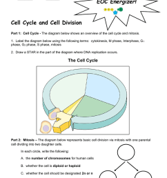 period cell cycle and cell division part 1 cell cycle the diagram below shows an overview of the cell cycle and mitosis 1  [ 791 x 1024 Pixel ]