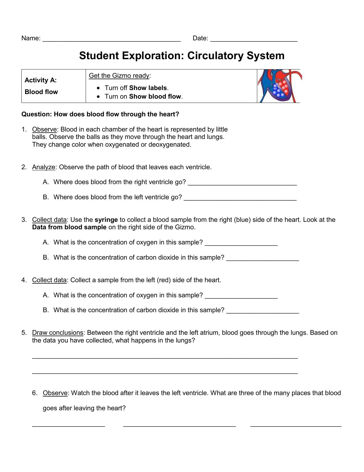 Student Exploration Circulatory System
