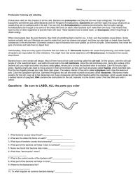 √ Prokaryotic And Eukaryotic Cells Worksheet Answer Key