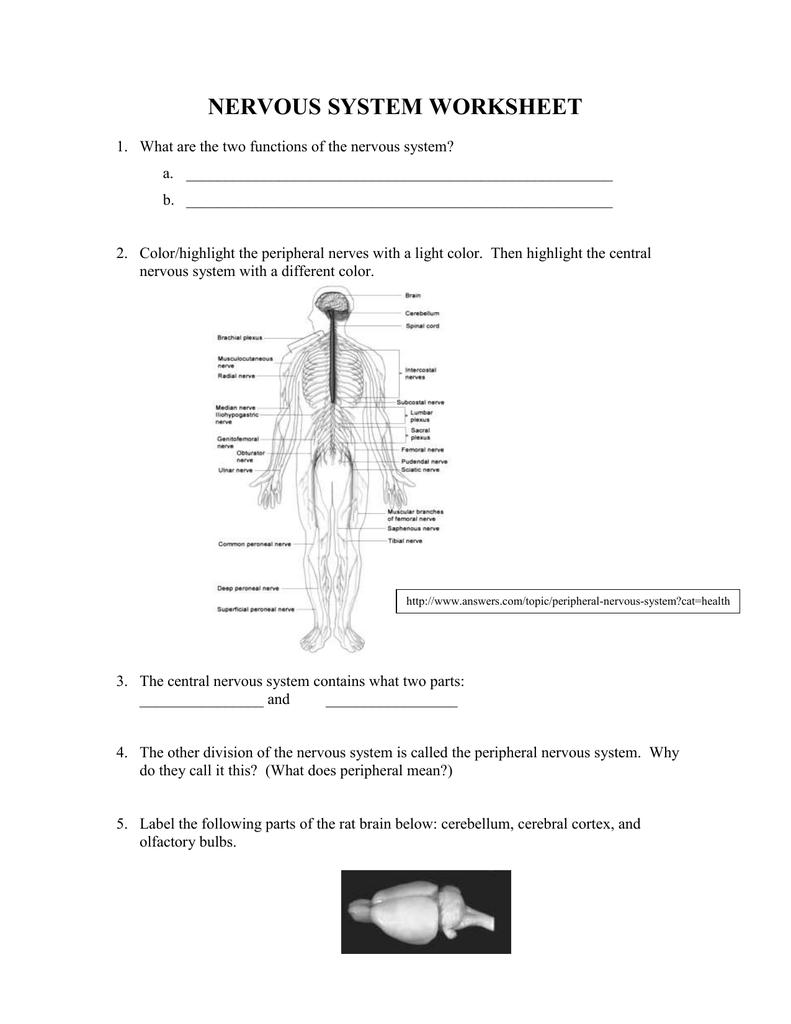 medium resolution of label nerve diagram