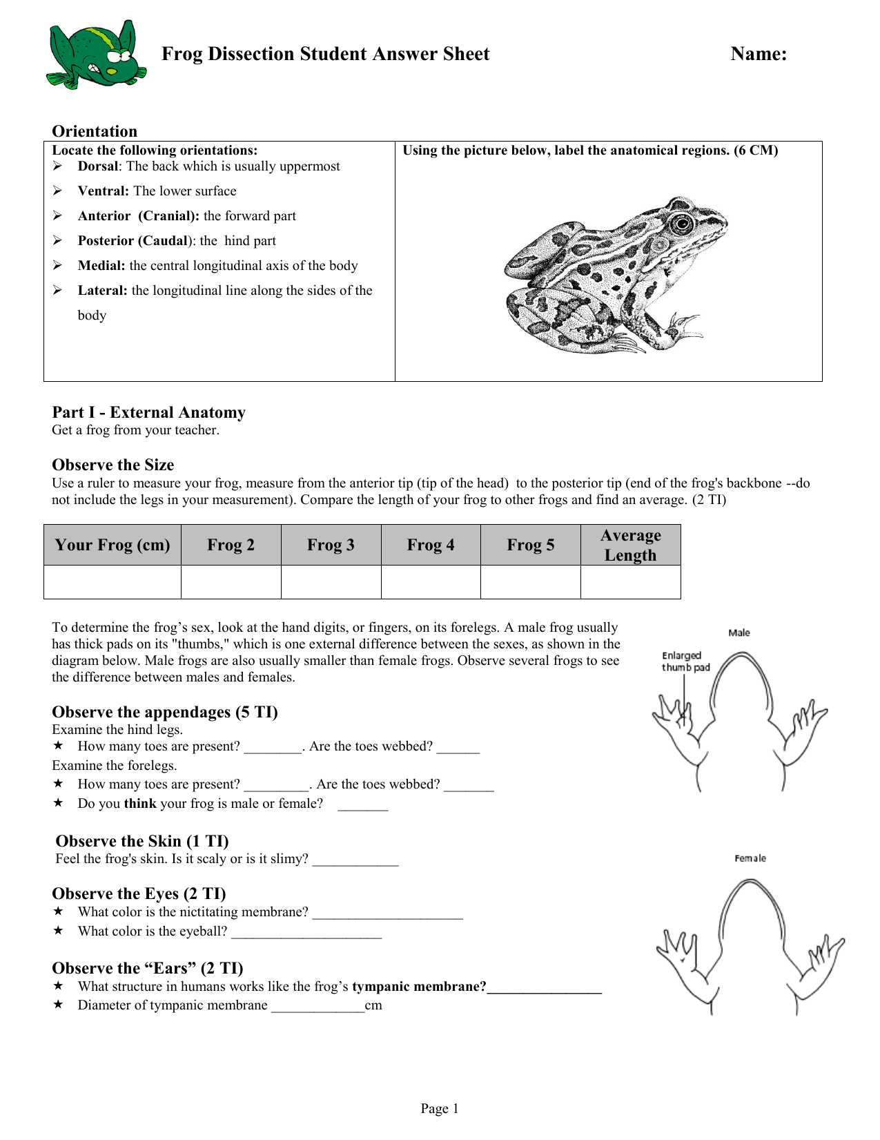 Net Frog Dissection Worksheet Answers