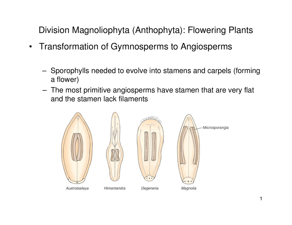 Gymnosperms And Angiosperms Worksheet Answers