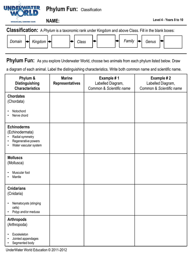 hight resolution of label echinodermatum diagram