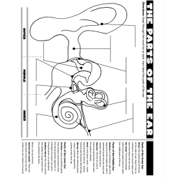 instructor reproducible name inner the parts of the ear middle directions read through the word list at right then label the parts of the ear  [ 768 x 1024 Pixel ]