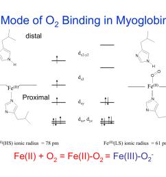 myoglobin structure and diagram [ 1024 x 791 Pixel ]