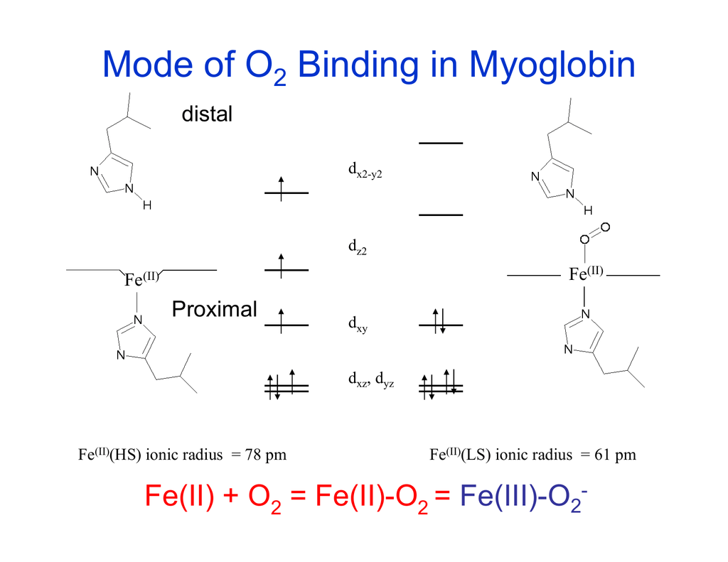 hight resolution of myoglobin structure and diagram