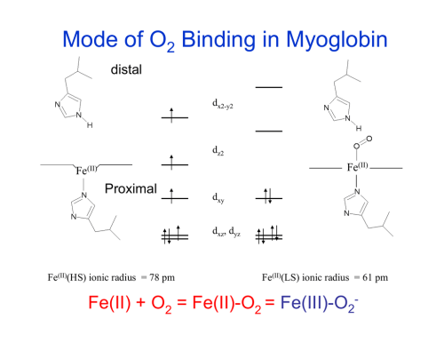 small resolution of myoglobin structure and diagram