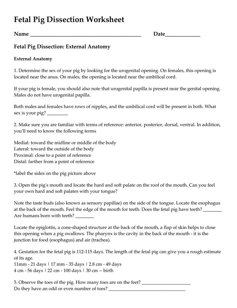 hight resolution of fetal pig dissection worksheet name
