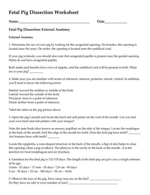 small resolution of fetal pig dissection worksheet name