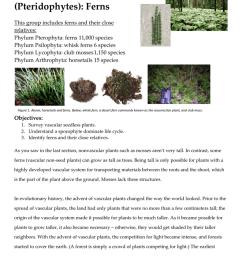 club mos plant diagram [ 791 x 1024 Pixel ]