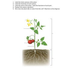 Diagram Of A Flowering Plant With Label Parts Comet Body Systems In Plants 014471562 1 2e6002075e17922411ba60e1816cbeb3 Png