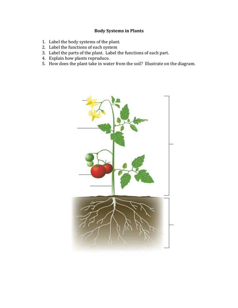 medium resolution of body systems in plants 1 2 3 4 5 label the body systems of the plant label the functions of each system label the parts of the plant