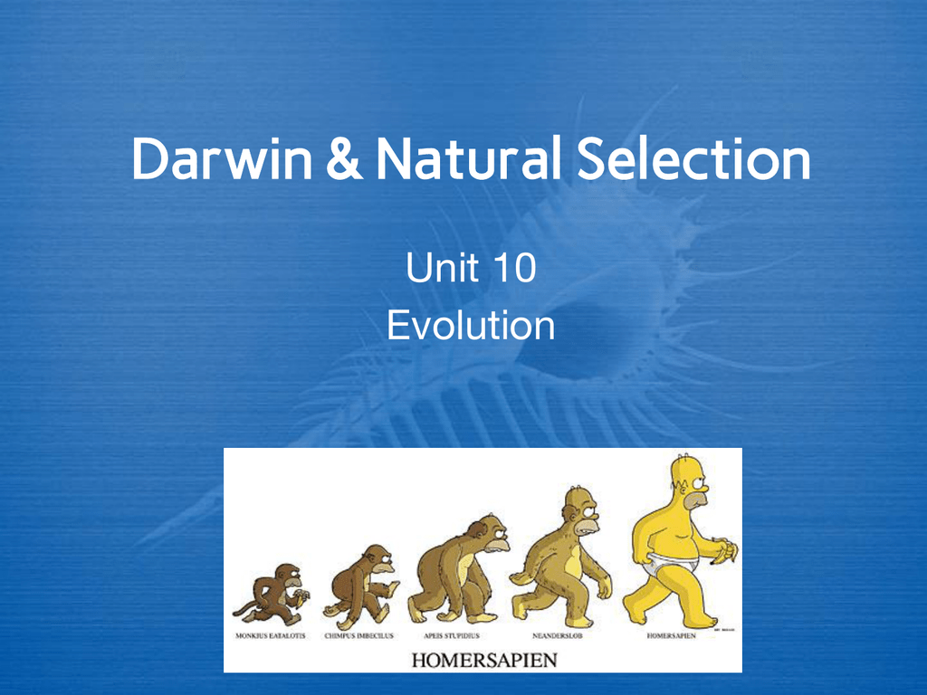 Darwin Amp Natural Selection Unit 10 Evolution