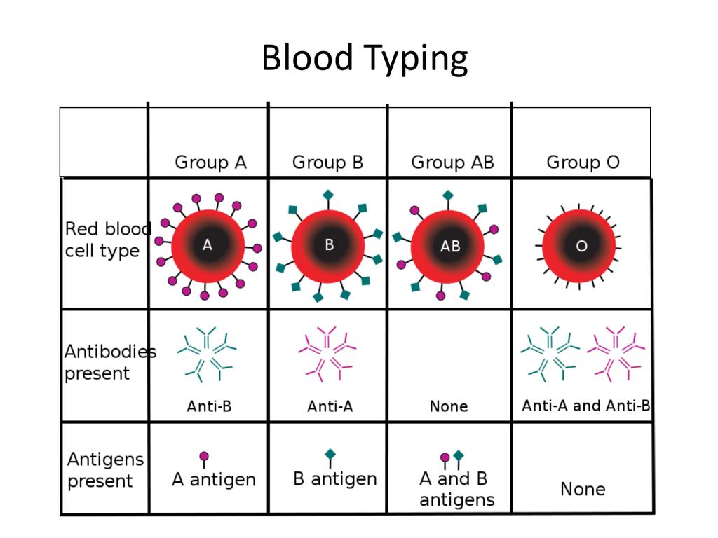 Lab Blood Typing