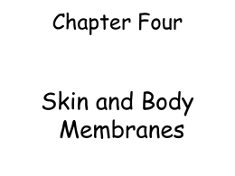 Skin Worksheet