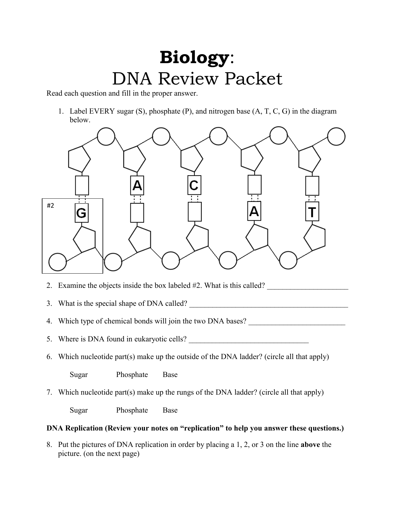 hight resolution of dna diagram labeled