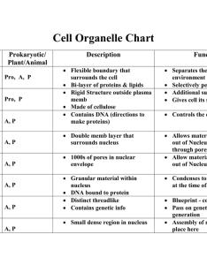 also cell organelle chart name prokaryotic description rh studylib