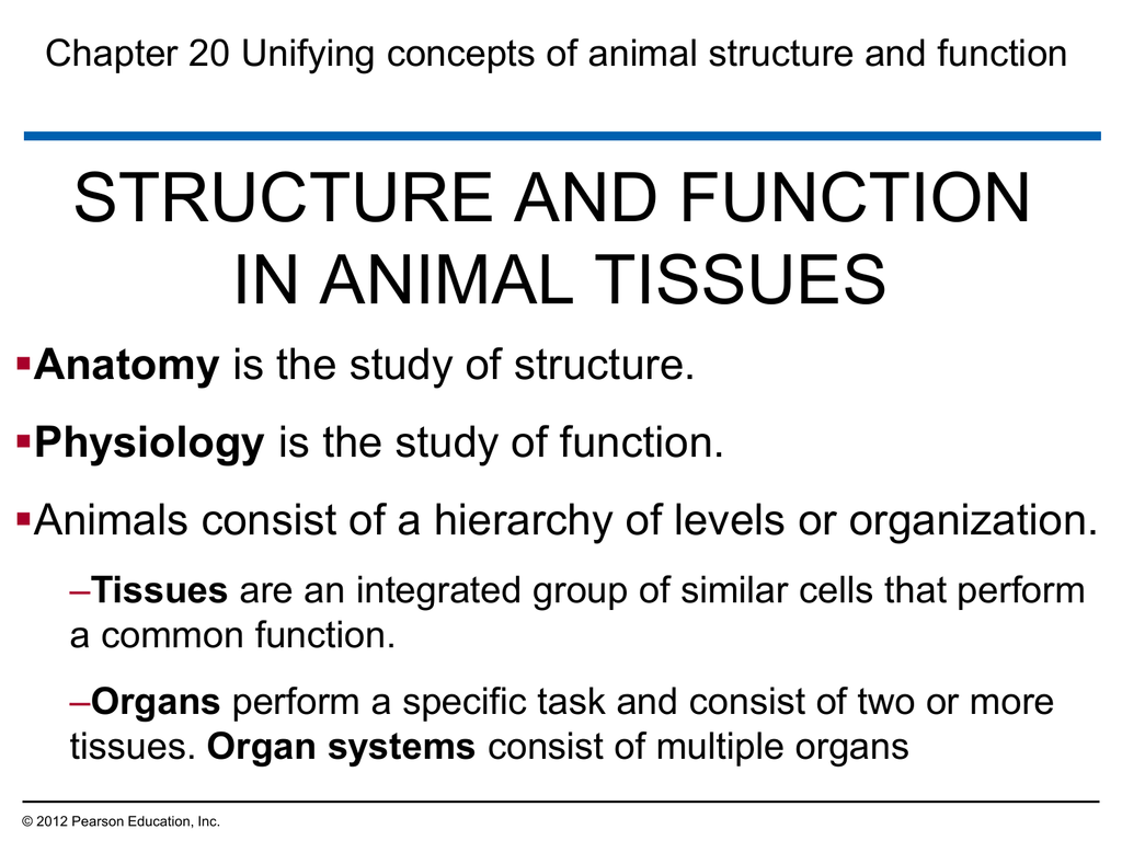 Structure And Function In Animal Tissues Anatomy
