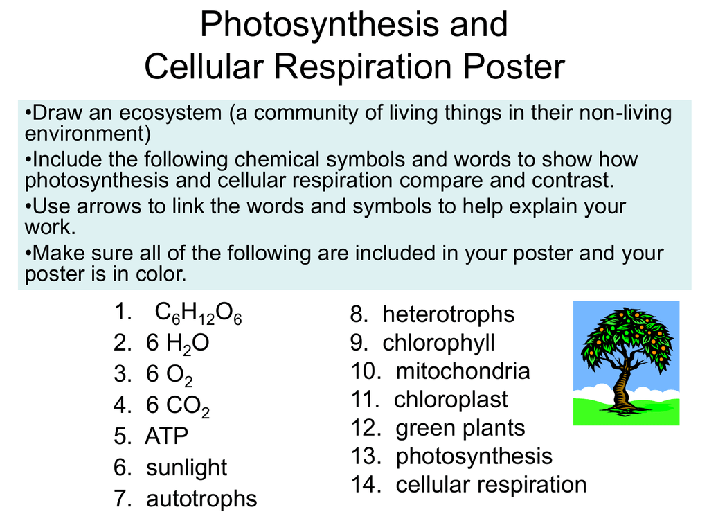 photosynthesis and cellular respiration cycle diagram australian power plug wiring poster 017815411 1 60b1683726dae5d4b82c566f787d6439 png