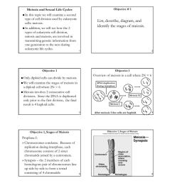 diagram step of meiosi [ 791 x 1024 Pixel ]