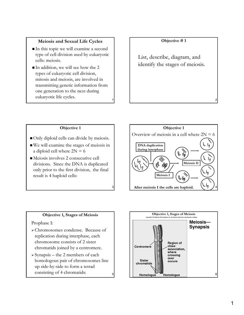 medium resolution of diagram step of meiosi