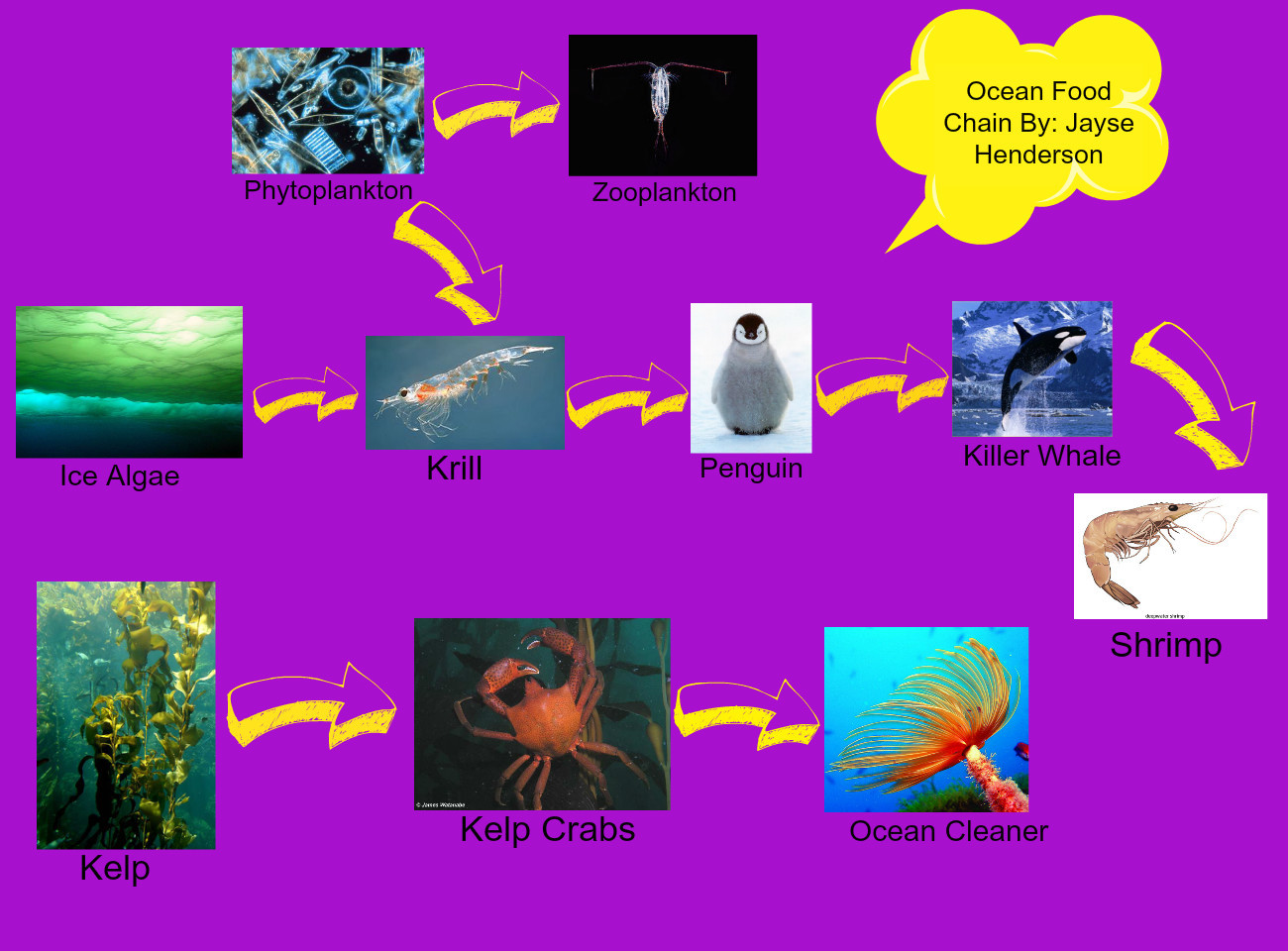 pacific ocean food web diagram toyota corolla wiring stereo simple marine chain pictures to pin on pinterest