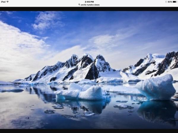 arctic tundra - ashley