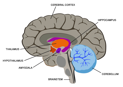 internal brain diagram kenmore dryer belt replacement parts