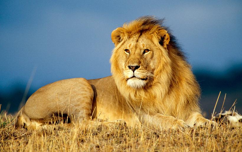pierderea în greutate leu