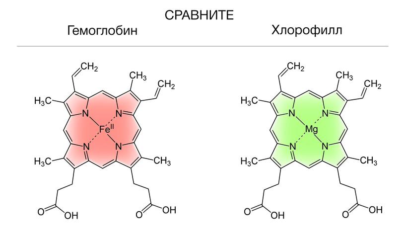 Slăbire clorofilă