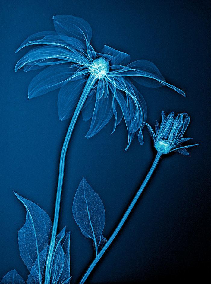 Немец сделал рентген растениям, и у него получился удивительно яркий проект